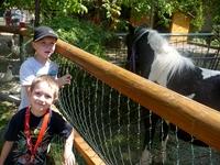 Obrázek k zájezdu, dětskému táboru Prázdniny na koních v Dědečkově obůrce